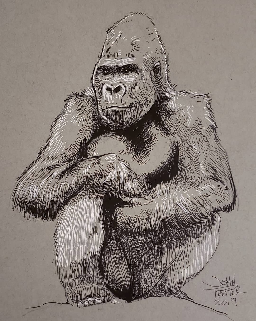 Charlie, Western Lowland Gorilla Ink/Gel Pen on Toned Paper