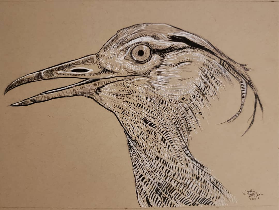 Kori Bustard Ink/Gel Pen on Toned Paper