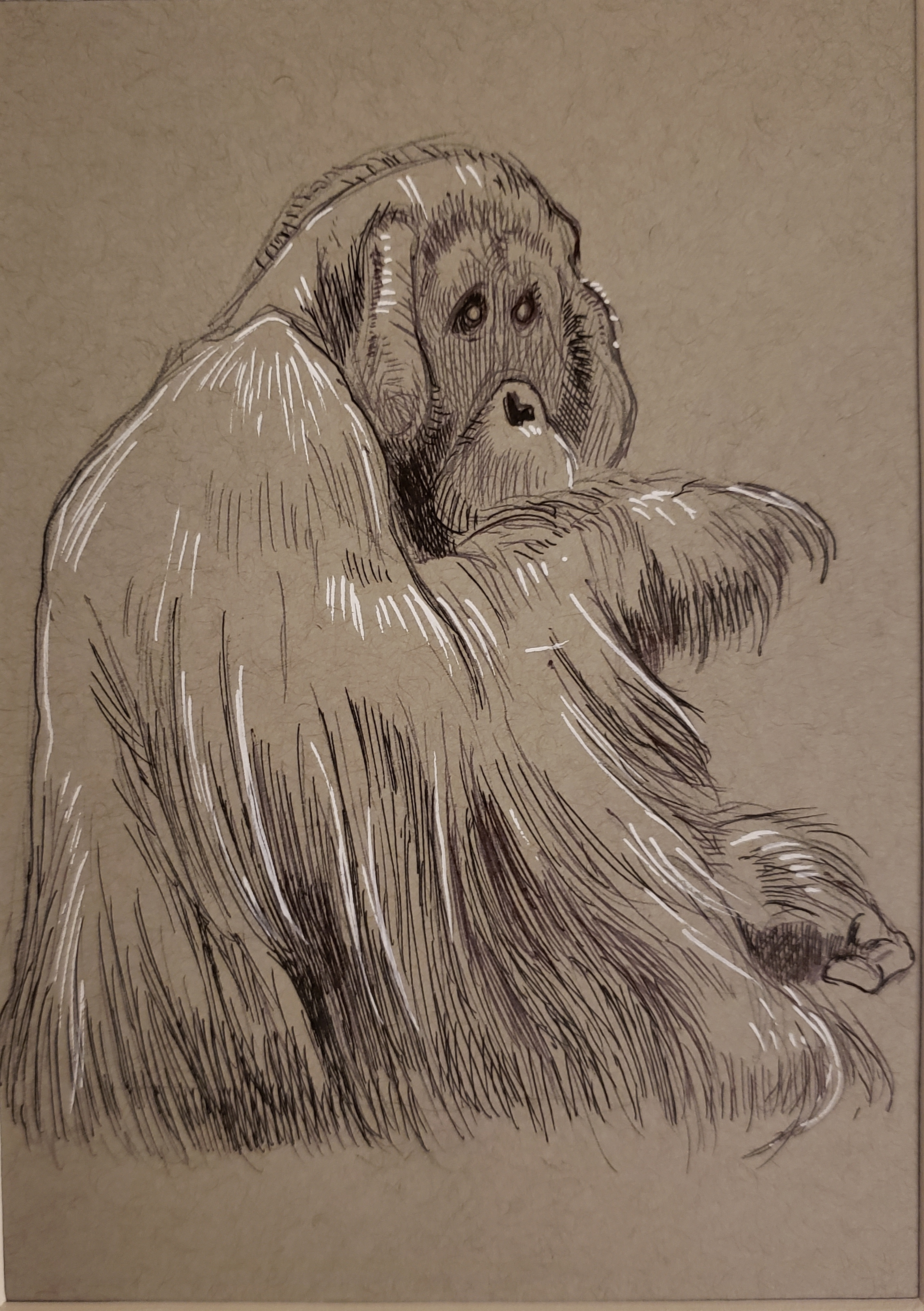 Male Orangutan Ink/Gel Pen on Toned Paper
